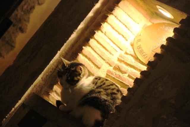 all'ingresso un gatto