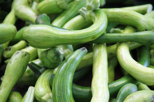 le amate zucchine trombetta, anche se siamo fuori stagione