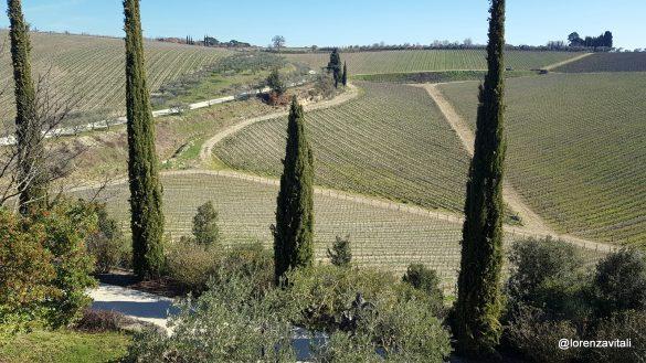 I vini di Tolaini all'Asinello